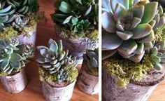 http://thehitchingpostsf.com/tag/succulent-planters/