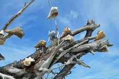 dead trees on the beach at Botany Bay Plantation