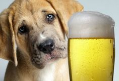 The Gifted Pet  ♥: Dangerous Foods Your Dog Should Never Eat!!