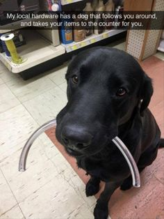 Look at this sweet face... Would definitely be a frequent customer in this shop!