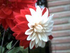 Una flor tremendamente bella que merece la pena ver