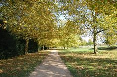 Stowe autumn walk, countryside, trees