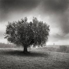 A Tree Not Far From Pitigliano