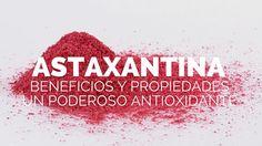Descubre las propiedades, beneficios y usos de la astaxantina, un poderoso…
