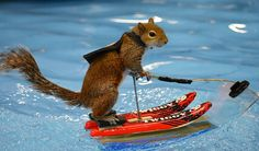 Twiggy the Squirrel to make splashy appearance at Larimer County Fair – Loveland Reporter-Herald