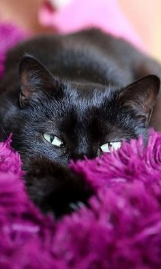 Black cat - Love the eyes Pretty Cats, Beautiful Cats, Animals Beautiful, Cute Animals, Animals Images, Beautiful Babies, I Love Cats, Crazy Cats, Cool Cats