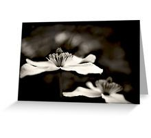 Clematic flower Greeting Card