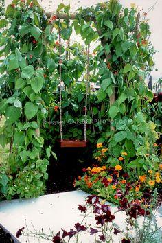 Child's swing with scarlet runner beans arbor trellis for a children's garden, calendula, flowers, patio, fun for kids outside