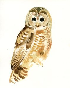 SPOTTED OWL Animal paintings, potential for spare bedroom