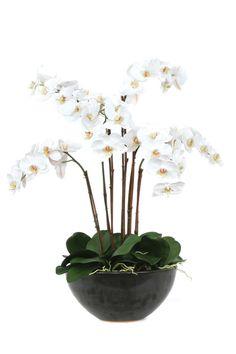 White Orchid Silk Flower Arrangement