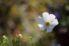 veredit-photographic-poems: das ist September ...