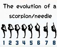 Evolution of a scorpion/needle. Working our way to 8! -> click to see specials on fitness