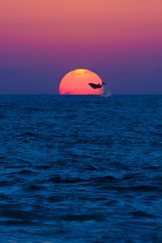 Dolphin jumping into the sun.
