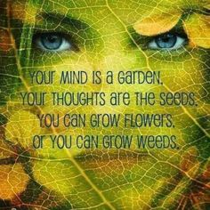 CULTIVATE YOUR MIND!  Remember successful gardners always cultivate their land, cultivate your mind for success, prosperity, kindness, forgiveness, love, understanding, gratitude, abundance, and watch those seeds manifest in your life.  Practice daily aff