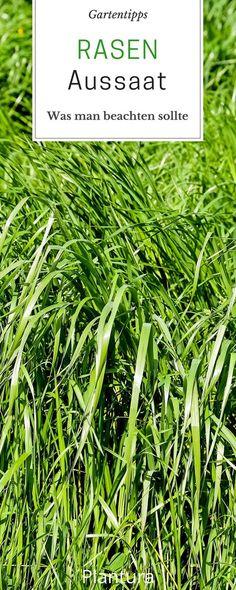 Pflegeleichten Garten mit üppigen Beeten anlegen Garten Tipp\u0027s - pflegeleichter garten anlegen