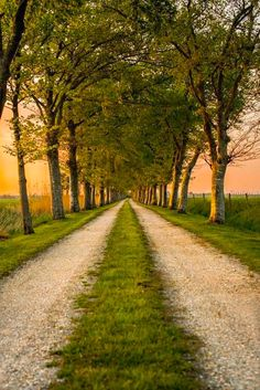 Tree-lined avenue (Netherlands) by Joris Brouwer on 500px