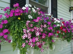 Flower Boxes – after going to Charleston, I appreciate how much window flower bo… – 2019 - Flowers Decor Window Box Plants, Window Box Flowers, Balcony Flowers, Window Planter Boxes, Flower Planters, Flower Boxes, Flower Ideas, Container Flowers, Container Plants