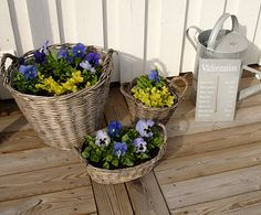 Why only one basket of pansies? Recycle old baskets - great idea