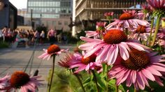 Pretty flowers on the High Line in New York