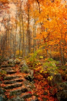 ✯ Peaceful Pathway