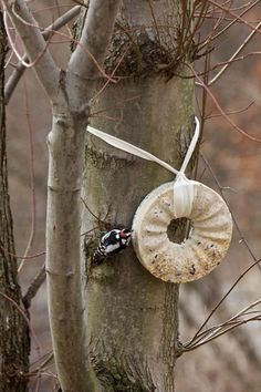 Making a birdseed suet wreath