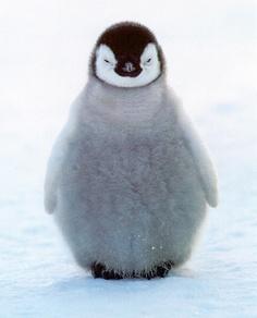 Sooo Cute Penguin!