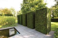 How To Trim Hedges?