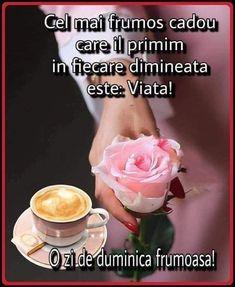 Flower Aesthetic, Good Morning, Motivation, Day, Buen Dia, Bonjour, Bom Dia, Determination, Inspiration