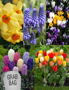 250+ bulbs for only $50.00 + free shipping!
