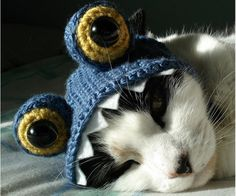 Cat in a hat :)) ....You can get the pattern for the hat here > http://www.etsy.com/shop/xmoonbloom