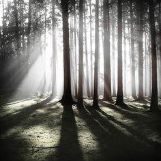 Forêt – Les photographies silencieuses de Jürgen Heckel
