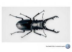 Volkswagen: New Beetle-R 225hp. The species evolution.
