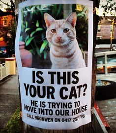 Is this cat yours?