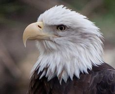 Favorite bird of all time: the Eagle.
