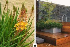 25 plantas resistentes ao sol - Please Tutorial and Ideas