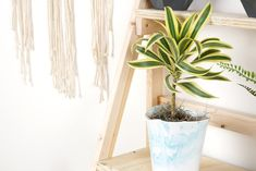 Check out our office decor tips and learn about how IoT devices can help you care for your indoor plants like Dracena plants. Snake Plant Care, Mason Jar Planter, Plastic Bottle Flowers, Plastic Bottles, Design Jardin, House Plant Care, Self Watering Planter, Bottle Garden, Gardens