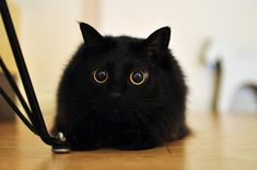 【閲覧注意】 どう見ても天使にしか見えない子猫が激写される : 〓 ねこメモ 〓
