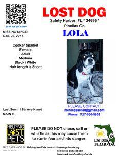 Lost Dog - Cocker Spaniel - Safety Harbor, FL, United States
