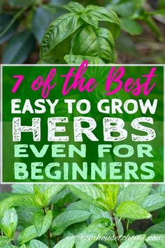 ILOVE these tips for growing herbs in the garden. All of these plants are easy to grow so they are great for beginners, and can survive in pots on the patio.  #fromhousetohome #gardeningtips #gardenideas #herbs  #vegetablegardening