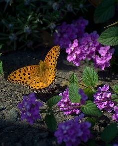 Fritillary With Flowers