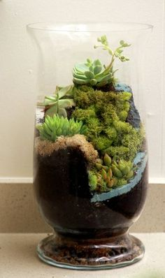 Moss and succulent terrarium