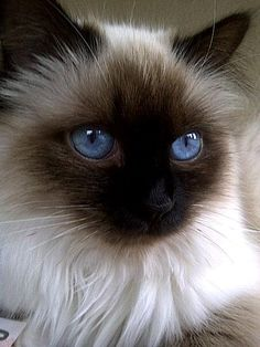 (98) André Vosloo Kittens, Cats, Pictures, Animals, Beautiful, Pets, Gatos, Animales, Kitty Cats