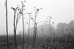 Photographer Mark Steinmetz's work is featured at Jackson Fine Art - a gallery that supports fine art photography including Mark Steinmetz photography. Artistic Photography, Fine Art Photography, Steinmetz, Utility Pole, Black And White, Gallery, Art Photography, Black White, Blanco Y Negro