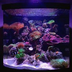 @nano_karen's nano! #ReefPro #polyplab . . . . #coral #reeftank #coralreeftank #reef #reefpack #reef2reef #reefcandy #reefersdaily #reefrEVOLution #coralreef #coraladdict #reefaholiks #reefjunkie #reeflife #instareef #allmymoneygoestocoral #instareef #reefpackworldwide #ilovemyreef #rarecorals #reefing #exoticcorals #reefporn #reeferdise #reefers4reefers #coralporn #aquarium #polyplab