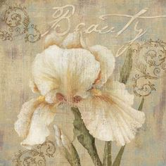 Beauty Iris Floral Print 1