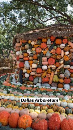 Garden Paths, Garden Art, Garden Design, Beach Cottage Kitchens, Starting A Farm, Cinder Block Garden, Pumpkin House, Tulip Wedding, Dallas Arboretum