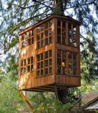 Amazing Tree House Masters on Animal Planet.