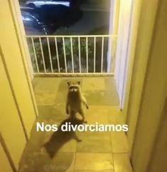 Cute Memes, Dankest Memes, Funny Images, Funny Pictures, Spanish Memes, Cursed Images, Meme Faces, Mood Pics, Stupid Memes