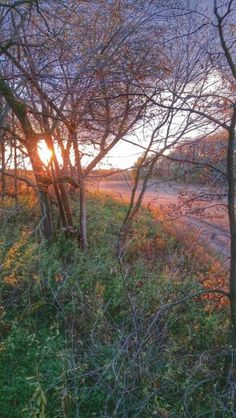 Sunset from the treestand