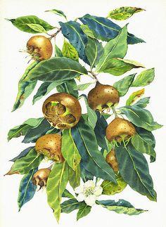 Mary Woodin watercolour illustration   Nature